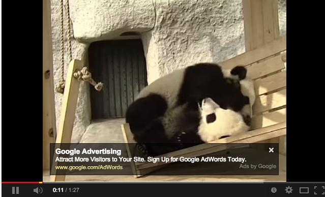 Hump Day: Pandas Playing